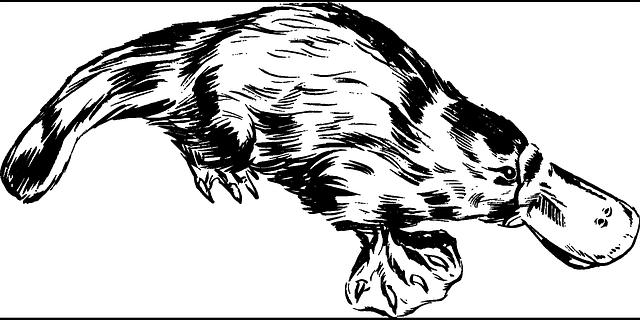 ptakopysk kreslený