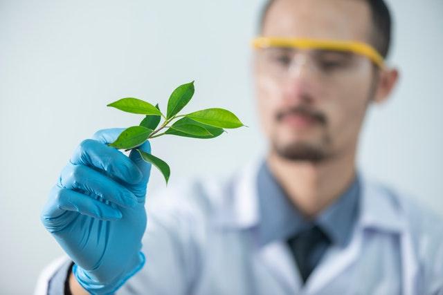rastlina v ruke